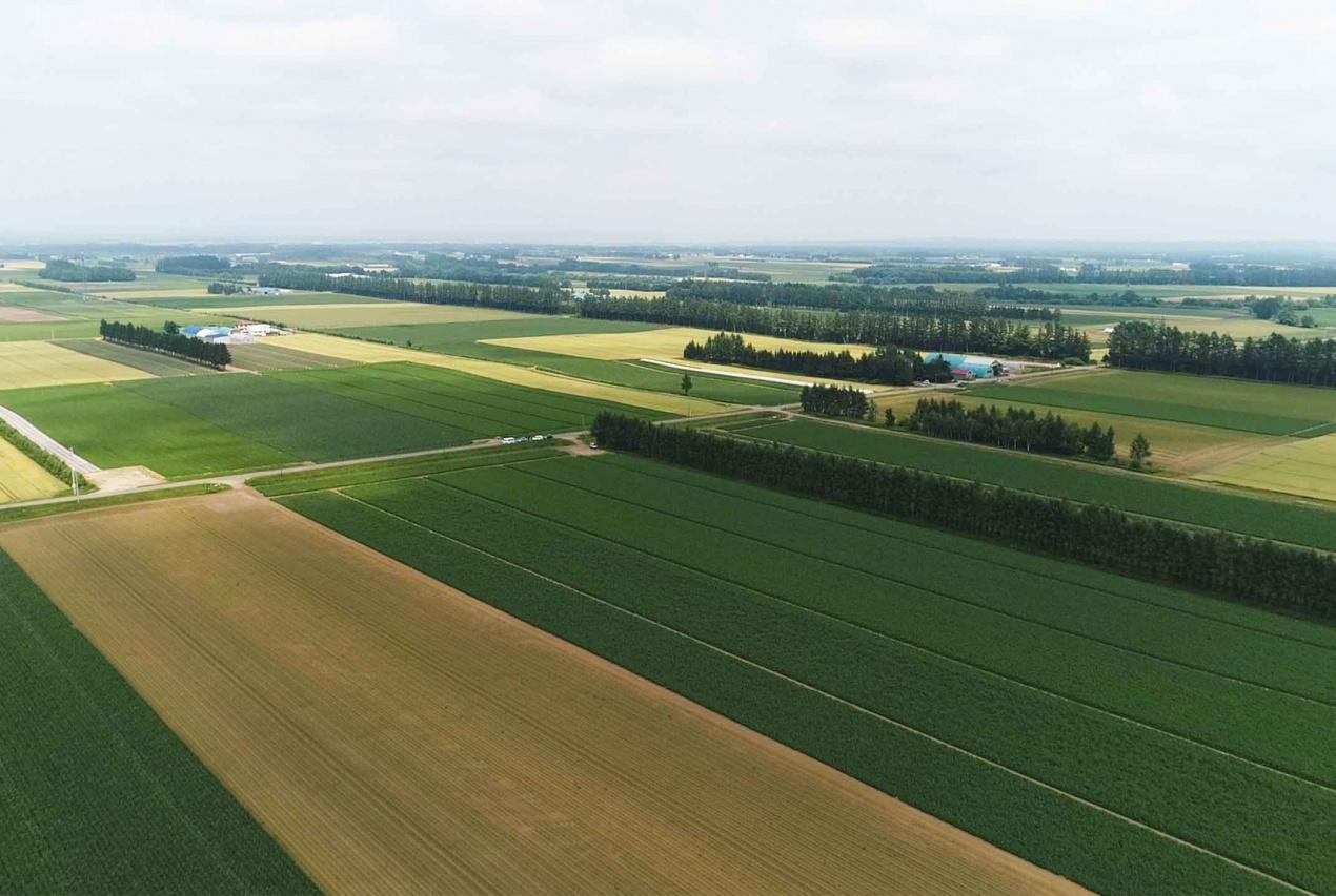 北海道帯広周辺十勝平野でのジャガイモ畑ドローン空撮